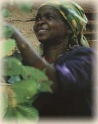 Lady Africafe