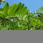 Luomuviljelmää ympäröivää suojakasvullisuuutta.